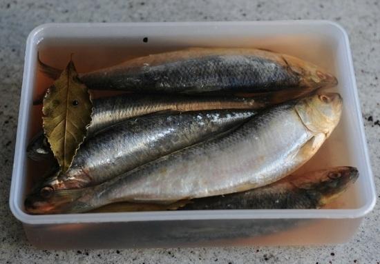 Как посолить сельдь в домашних условиях вкусно и быстро - учимся правильно солить рыбу 1