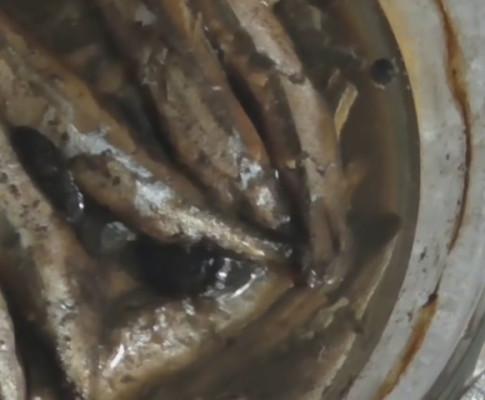 Как приготовить шпроты из мойвы в домашних условиях — рецепт и фото